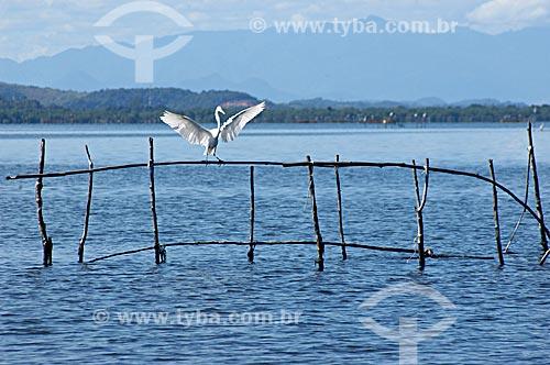 Assunto: Garça na APA de Guapimirim, no fundo da Baía de Guanabara  / Local:  Guapimirim - Rio de Janeiro - RJ - Brasil  / Data: 05/2007