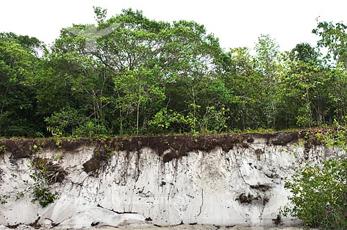 Assunto: Extratos do solo da vegetação de campina amazônica, perto da Reserva Biológica da Campina, do Instituto Nacional de Pesquisas da Amazônia - INPA / Local: perto de Manaus - Amazonas (AM) - Brasil  / Data: 05/01/2006