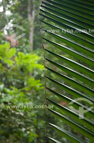 Assunto: Folha de palmeira na Reserva Biológica do Cuieiras  / Local: perto de Manaus - Amazonas (AM) - Brasil  / Data: 09/01/2006