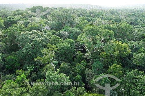 Assunto: Floresta amazônica de terra-firme, vista da torre de meteorologia do Instituto Nacional de Pesquisas da Amazônia - INPA, na Reserva Biológica do Cuieiras  / Local: perto de Manaus - Amazonas (AM) - Brasil  / Data: 08/01/2006