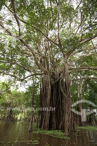 Assunto: Reserva de Desenvolvimento Sustentável Mamirauá em matas alagadas no Rio Solimões  / Local: Alto Amazonas - Amazonas (AM) - Brasil  / Data: 07/03/2007