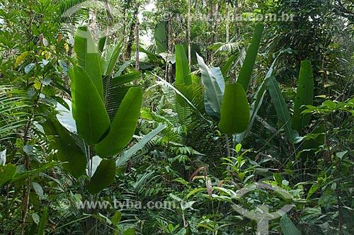 Assunto: Reserva Biológica do Cuieiras / Local: perto de Manaus - Amazonas (AM) - Brasil  / Data: 09/01/2006