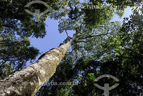 Assunto: Jatobá (Hymenaea courbaril) na região do Cerrado conhecida como Cerradão por possuir árvores de grande porte  / Local:  Parque Nacional das Emas - Goiás (GO) - Brasil  / Data: 29/07/2006