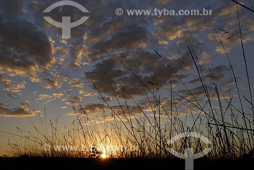 Assunto: Pôr do sol em campo limpo no Parque Nacional das Emas  / Local: Goiás (GO) - Brasil  / Data: 30/07/2006