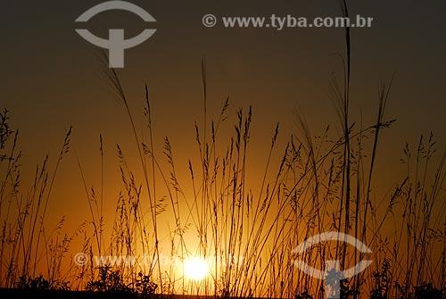 Assunto: Pôr do sol em campo limpo no Parque Nacional das Emas  / Local: Goiás (GO) - Brasil  / Data: 29/08/2006