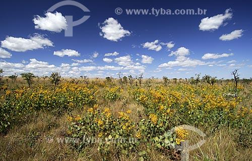 Assunto: Vegetação formada por arbustos no cerrado brasileiro denominado campo sujo / Local: Parque Nacional das Emas - Goiás (GO) - Brasil  / Data: 18/08/2006