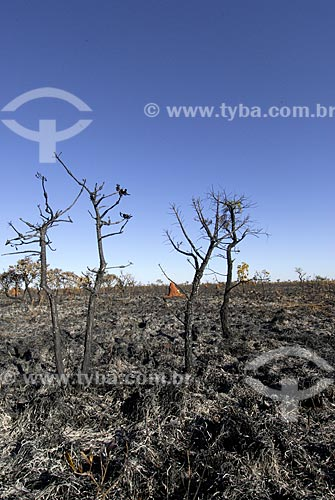 Assunto: Vegetação formada por arbustos no cerrado brasileiro - denominado campo sujo - após queimada / Local: Parque Nacional das Emas - Goiás (GO) - Brasil  / Data: 15/10/2006