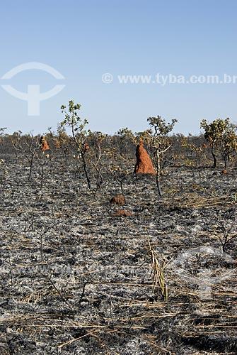 Assunto: Vegetação formada por arbustos no cerrado brasileiro - denominado campo sujo - após queimada / Local: Parque Nacional das Emas - Goiás (GO) - Brasil  / Data: 21/10/2006
