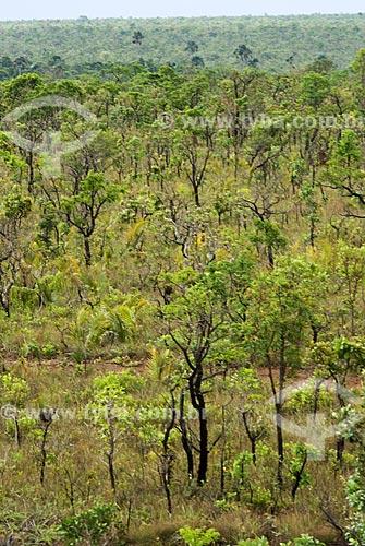 Assunto: Vegetação formada por arbustos no cerrado brasileiro denominado Campo Sujo / Local: Parque Nacional das Emas - Goiás (GO) - Brasil  / Data: 07/09/2007