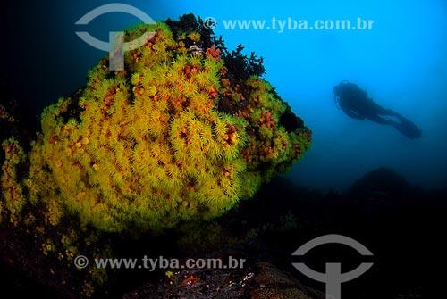 Assunto: Corais invasores e mergulhador em Angra dos Reis, RJ / Local: Baía da Ilha Grande - Angra dos Reis - Rio de Janeiro (RJ) - Brasil / Data: 04/06/2010