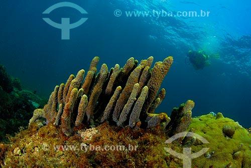 Assunto: Esponjas e mergulhador em Angra dos Reis, RJ / Local: Baía da Ilha Grande - Angra dos Reis - Rio de Janeiro (RJ) - Brasil / Data: 04/06/2010