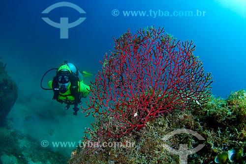 Assunto: Corais e mergulhador em Angra dos Reis, RJ / Local: Baía da Ilha Grande - Angra dos Reis - Rio de Janeiro (RJ) - Brasil / Data: 04/06/2010