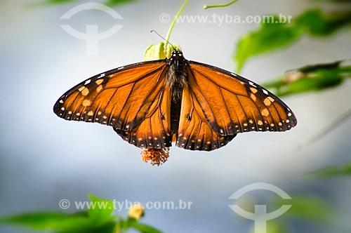 Assunto: Borboleta-monarca (Danaus plexippus) no Parque das Aves  / Local:  Foz do Iguaçu - Paraná - PR - Brasil  / Data: 06/2009