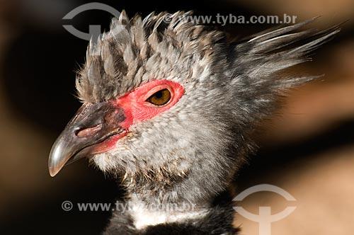 Assunto: Tachã (Chauna torquata) no Parque das Aves  / Local:  Foz do Iguaçu - Paraná - PR - Brasil  / Data: 06/2009