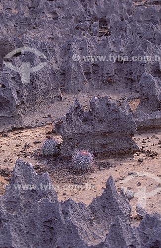 Assunto: Sítio pedregoso com relevos intercalados de argila e calcário  / Local:  Central - Bahia - BA - Brasil  / Data: 1995
