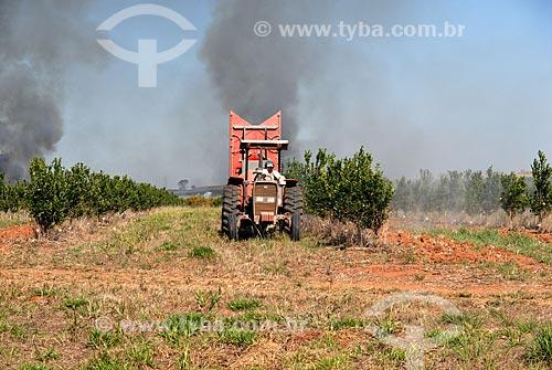 Assunto: Trator aplicando defensivo agricola em plantação cítrica  / Local:  Mogi-Mirim - São Paulo (SP) - Brasil  / Data: 07/2006