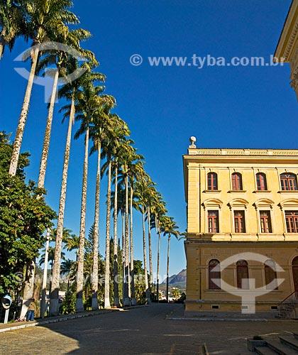 Assunto: Fileira de palmeiras imperiais (Roystonea oleracea) centenárias em frente ao prédio do Colégio Anchieta  / Local:  Nova Friburgo - Rio de Janeiro - RJ - Brasil  / Data: 06/2010