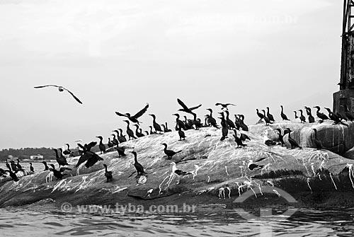 Assunto: Pássaros pousados em pedra na Baia de Guanabara  / Local:  Rio de Janeiro - RJ - Brasil  / Data: 11/2007
