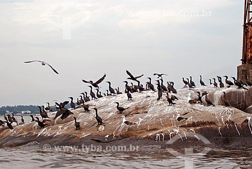 Assunto: Pássaros pousados em pedra na Baia de Guanabara / Local: Rio de Janeiro (RJ) - Brasil / Data: 11/2007