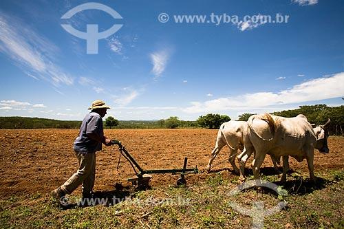 Assunto: Lavrador arando a terra com carro de boi  / Local:  Tabira - Pernambuco (PE) - Brasil  / Data: 01/2010