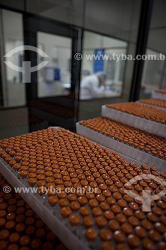Produção de vacinas combinadas contra DTP e Hib chamada tetravalente, que protege ao mesmo tempo contra difteria, tétano, coqueluche e infecções graves pelo Haemophilus influenzae no campus de Biotecnologia na Biomanguinhos - Fiocruz - Fundação Oswaldo Cruz   - Rio de Janeiro - Rio de Janeiro - Brasil