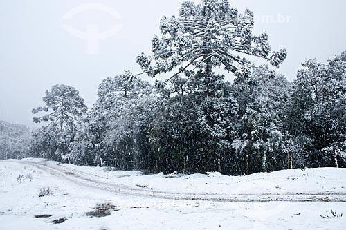 Assunto: Paisagem coberta de neve / Local: Urubici - Santa Catarina (SC) - Brasil / Data: 04/08/2010