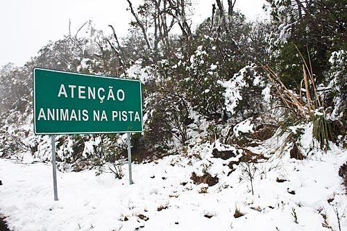 Assunto: Placa informando a presença de animais na pista  / Local: Urubici - Santa Catarina (SC) - Brasil / Data: 08/2010
