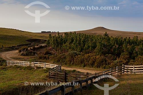 Assunto: Cerca e pinheiros  / Local:  Campos de Cima da Serra - Rio Grande do Sul  / Data: 09 /2010