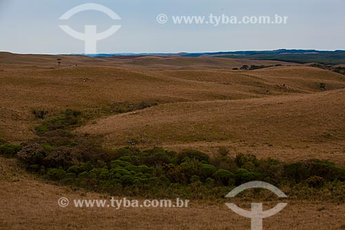 Assunto: Paisagem típica dos Campos de Cima da Serra  / Local:   Rio Grande do Sul  / Data: 09 /2010