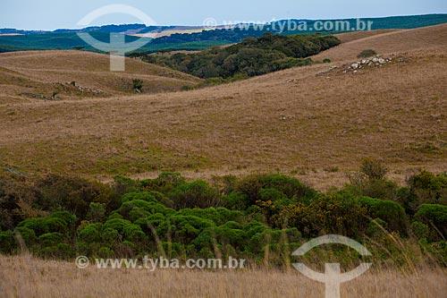 Assunto: Paisagem típica dos Campos de Cima da Serra / Local: São Francisco de Paula - Rio Grande do Sul (RS) - Brasil / Data: 09/2010