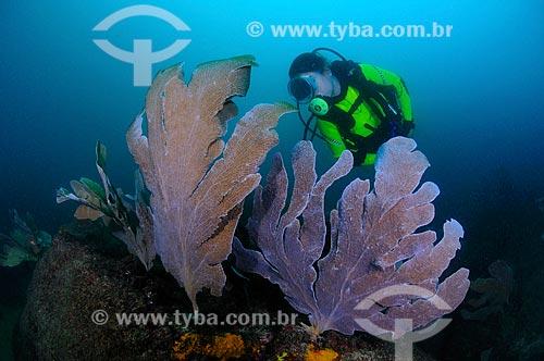 Assunto: Mergulhadora e gorgônias / Local: Ilha dos Pargos - Cabo Frio - Rio de Janeiro (RJ) - Brasil / Data: 14/10/2008