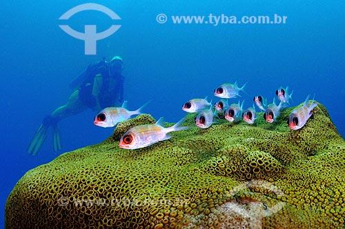 Assunto: Mergulhadora e peixes / Local: Ilha dos Papagaios - Cabo Frio - Rio de Janeiro (RJ) - Brasil / Data: 14/10/2008
