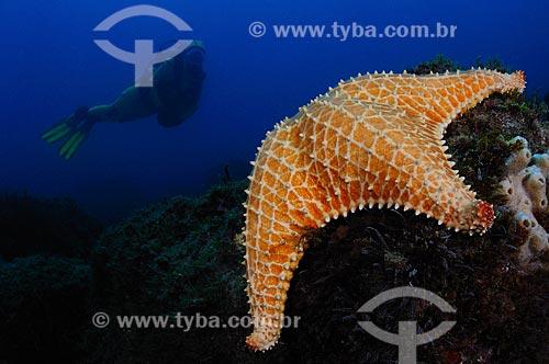 Assunto: Mergulhadora e estrela do mar / Local: Ilha dos Papagaios - Cabo Frio - Rio de Janeiro (RJ) - Brasil / Data: 14/10/2008