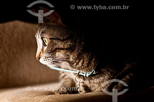 Assunto: Gato doméstico (Felis catus) / Local: Blumenau - Santa Catarina (SC) - Brasil / Data: 24/10/2010