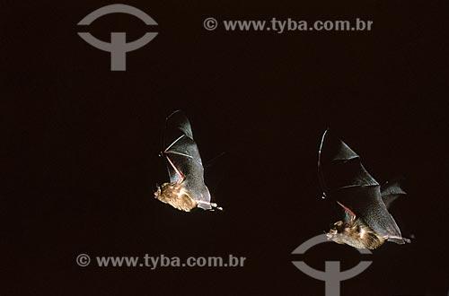 Assunto: Morcego voando / Data: 1996