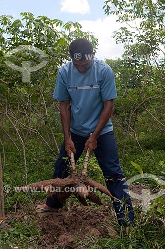 Assunto: Produtor rural cadastrado na Estação Conhecimeto da Área de Proteção Ambiental - APA  - do Igarapé do Gelado cuidando de plantação de mandioca de sua propriedade  / Local:    próximo a Parauapebas - Pará  - Brasil  / Data: 10/2010