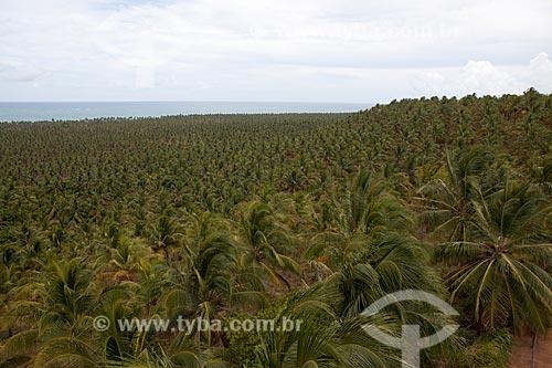 Assunto: Coqueiral visto do mirante da Praia da Praia do Gunga  / Local:  Alagoas  / Data: 2011