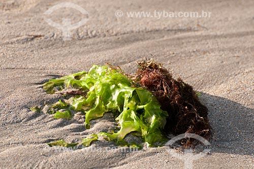 Assunto: Alga marinha   / Local:  Praia de Ponta Verde - Maceió - Alagoas  / Data: 2011