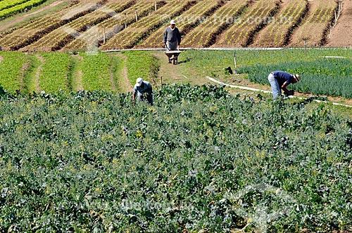 Assunto: Agricultores trabalhando em plantação de hortaliças na Região Serrana Fluminense - Estrada Teresópolis-Friburgo  / Local:  Teresópolis - RJ - Brasil  / Data: 08/2010