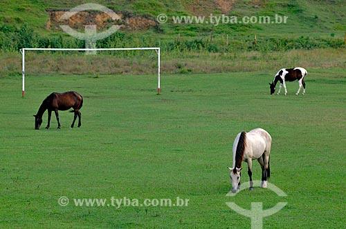 Assunto: Cavalos pastando em campo de futebol de grama natural  / Local:  Casimiro de Abreu - RJ - Brasil  / Data: 05/2010