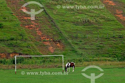 Assunto: Cavalo pastando em campo de futebol de grama natural  / Local:  Casimiro de Abreu - RJ - Brasil  / Data: 05/2010