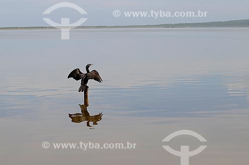Assunto: Biguá na Lagoa de Maricá  / Local:  Maricá - Rio de Janeiro - RJ - Brasil  / Data: 05/2010