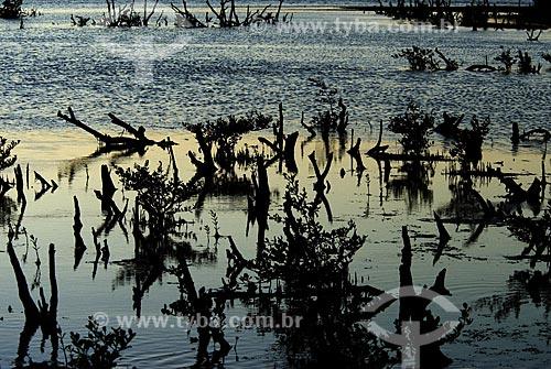 Assunto: Mangue no pôr do sol - Dormitório das Garças - Cabo Frio - RJ - Brasil / Local: Reserva Natural Dormitório das Garças - Cabo Frio - Rio de Janeiro (RJ) - Brasil / Data: Janeiro 2009