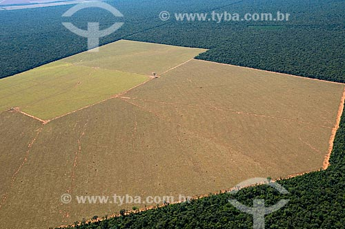 Assunto: Assunto:Vista aérea de campos desmatados do cerrado, para plantio de grãos  / Local:  Data: Canarana - Mato Grosso - MT  / Data: Canarana - Mato Grosso - MT / Local: 07/2009