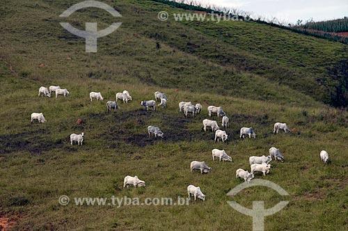 Assunto: Pasto com gado nelore  / Local:  Carmo do Rio Claro - Minas Gerais - MG  / Data: 07/2009
