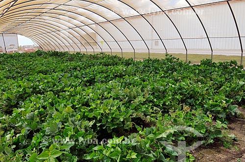 Assunto: Estufas de pesquisa de soja e milho geneticamente modificados para resistência a insetos  / Local:  Jerseyville - Illinois - Estados Unidos da América - EUA  / Data: 08/2009