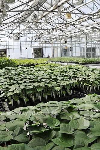 Assunto: Estufa de pesquisa de algodão geneticamente modificada  / Local:  Chesterfield - Saint Louis - Missouri - Estados Unidos da América - EUA  / Data: 08/2009