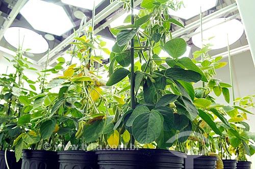 Assunto: Estufas de pesquisa de soja geneticamente modificada  / Local:   Chesterfield - Saint Louis - Missouri - Estados Unidos da América - EUA  / Data: 08/2009