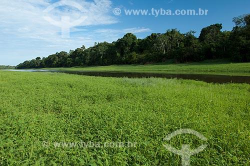 Assunto: Beira de lago de várzea amazônica na Reserva de Desenvolvimento Sustentável Mamirauá  / Local:  Amazonas - AM - Brasil  / Data: 2007