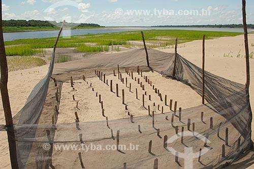 Assunto: Berçário de quelônios na praia do Tapiira, no rio Japurá  / Local:  Reserva de Desenvolvimento Sustentável Amanã - Amazonas - AM - Brasil  / Data: 2007